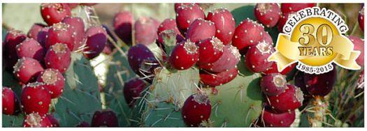 Cheri's desert harvest